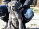 Royal Elite's Past Puppy Litter