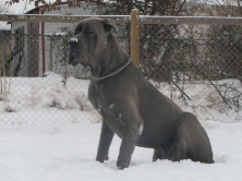 Royal Elite's Kaine - Sire