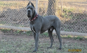Royal Elite's Jake - Sire