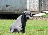 Gabby & Jake's Puppy, April 2015 Litter