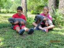 Gabby & Jake's Puppies, April 2015 Litter