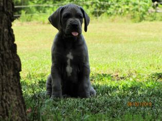 Gabby & Jake's Puppy, April 2015 Litter